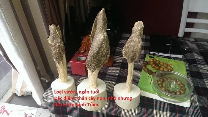 Giá Trầm Hương Ở Việt Nam