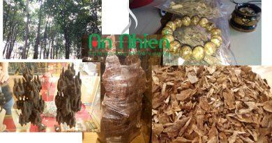 Trầm Hương Là Gì ?Nói chính xáctrầm hương không phải là một loại gỗ,không phải là tên cây.Mà là những loại dầu được tiết ra trong quá trình tự chữa lành vết thương sau khi bị thiên nhiên phá hủy.